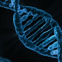 Editing the Genome: Now We Can. Should We?